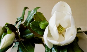 magnolia wedding bouquet gem photo